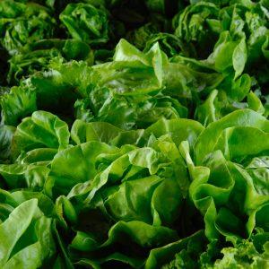 Lettuce & Greens